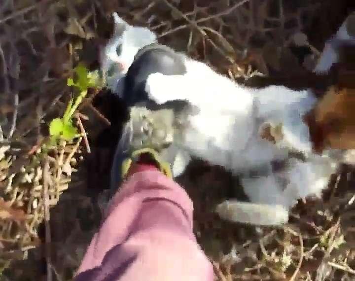 Imagini revoltătoare! Un tânăr a asmuțit câinii pe o pisică