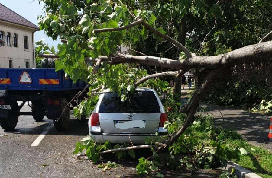 Copacii căzuți peste mașini în urma furtunii