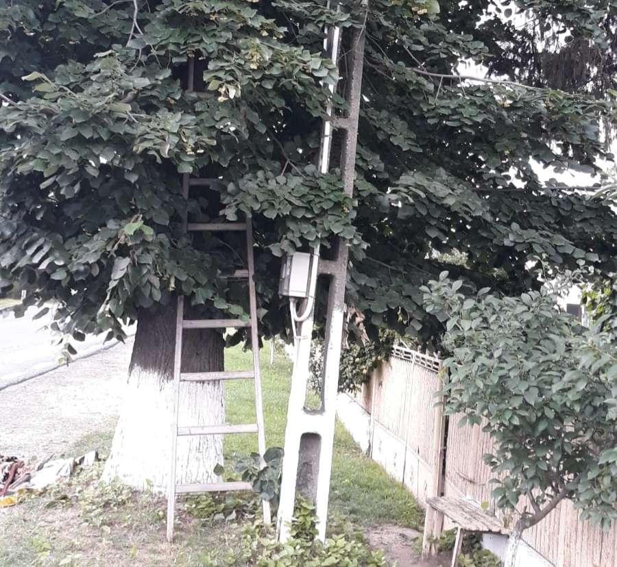 Un bărbat a decedat după ce a căzut din pom